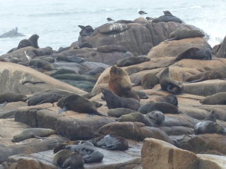 A seal colony on Cabo Polonio