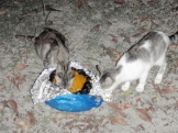 … and also fed the campsite cats!