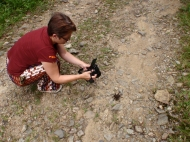 An encounter with a tarantula on the old Gracioso road - but how to move it out of the way so we could drive on?