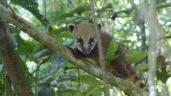 And then the little ones climbed into the trees to present themselves for cute photographs