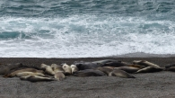 Peninsula Valdes and our first of much marine wildlife