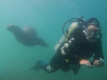 Diving next to a Sea Lion colony - they come out to check us out and play!