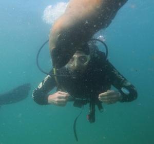 A sea lion checks us divers out (picture by Scuba Duba)