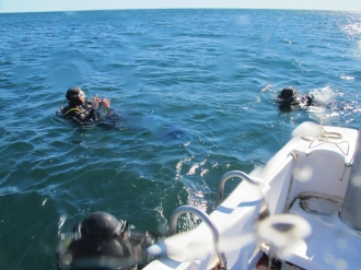 Surfacing after the dive, very cold but delighted!