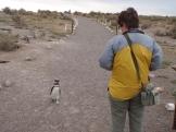 Becca meets penguin