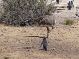Penguin considers passing Rhea