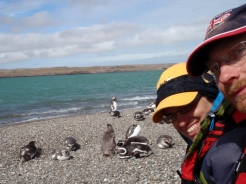 A boat trip from Puerto Deseado to see more penguins and many other sea birds...