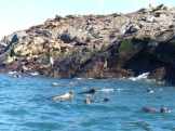 Sea lions out for a morning frolic in the sea