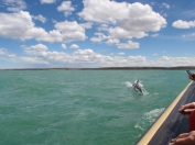 Visited by more dolphins on the way back