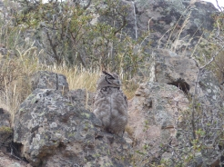 Where a mother owl stands guard across a gorge