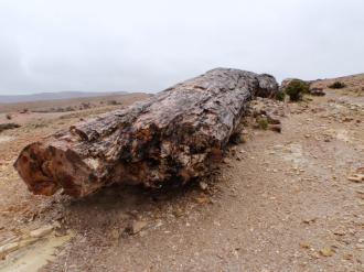 """We were just able to see and appreciate the """"petrified forest"""", an area of fossilised trees, through the downpour"""