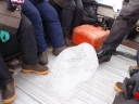 Picking up a piece of sea ice of a suitable size on route…