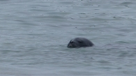 It was also nice to see at least one seal in its element in the water