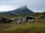 All through Patagonia we enjoyed seeing the horses roaming free