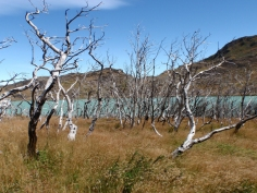 … is eerily similar to fire damage in Torres del Paine