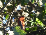 The bush outside the little library / museum where we were based was full of the island's endemic hummingbirds