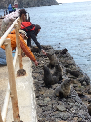 We got a closer look at the Fur Seals on the way back