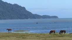 This was our first contact with the shores of the Pacific, here quiet and sheltered behind Chiloe island