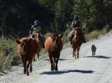 Chilean gauchos