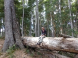 Big trees!!