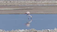 Although there were only a smattering of flamingos