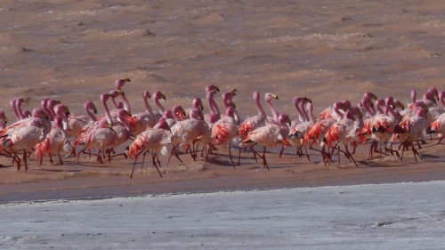 Complete with a group of very pink flamingos