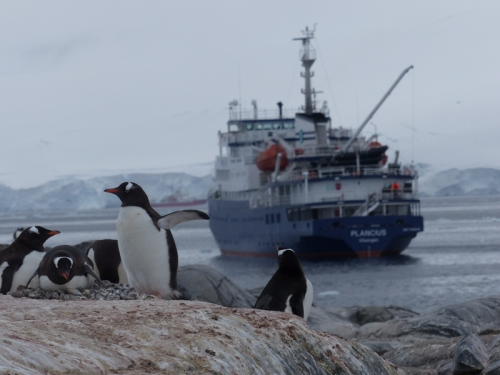 Our ship in Antarctic waters