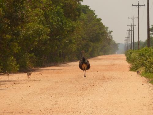 Rhea ahead!
