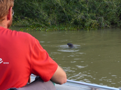 Excitedly getting a look at our first Giant Otter - we didn't know there would be more later...