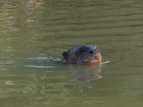 The Giant River Otters were the most fun to watch
