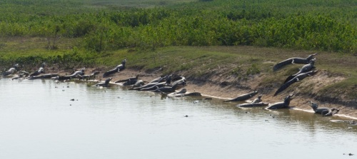 Pools with many, many Caimans!