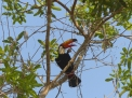 When the Toucan wasn't being mobbed, it had a moment to sit in the branches of the trees