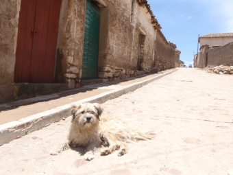 Dog guards the street up to the market in Tarabuco