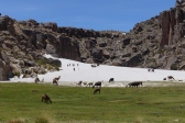 The llama herd within the bowl setting of the estancia