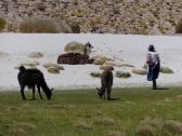 La Abuela checking her herd