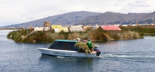 Bringing a harvest of new reeds to town - new reeds constantly have to be laid down to maintain the islands