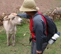 Becca meets donkey