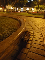 Our first visit to Parque Kennedy, famous for its population of cats, was on the evening we arrived