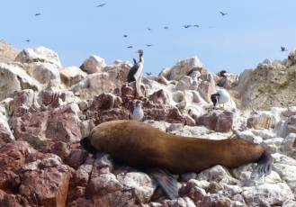 Sealions do a lot of lying around here too!