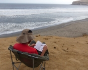 Camped on the Paracas peninsula, Bruce takes up position above a beach full of seabirds