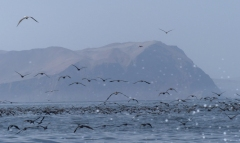 In places, the air was thick with sea-birds