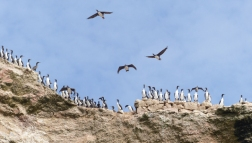 There are lots of cormorants