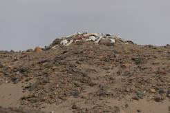Remains of a Nazca/Huari burial site...