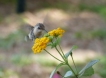 Continuing to enjoy the humming birds