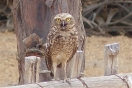 There seemed to be resident owls at many of the archaeological sites
