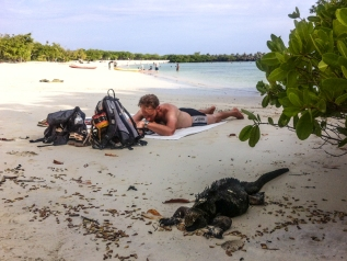 Sharing a spot in the shade with a Marine Iguana