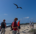 Getting close to the frigatebirds