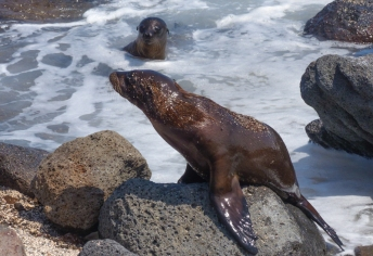 Some sealion pups come to check us out