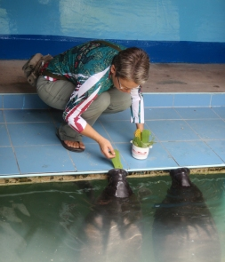 They also look after rescued Manatees, giving us another chance to get a look at these wonderful creatures