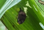 This bat that had found a quiet shelter under a leaf for the day, until we turned up!